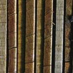 medienos pasirinkimas ban